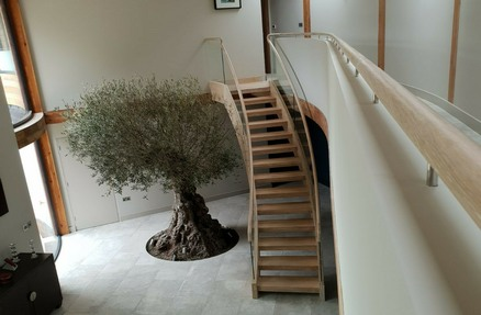 Glass Staircase,glass stairs,oak and glass stairs,oak and glass staircase: